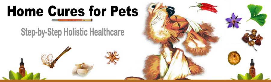 Home cures for pets using herb, homeopathy, flower remedies and acupressure for pets.