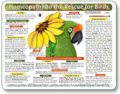 Homeopathic Remedies for Birds