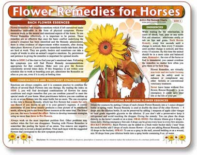 Flower essence treatments for equine illness, injuries and emotional states.