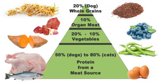 Food Pyramid for Dogs and Cats