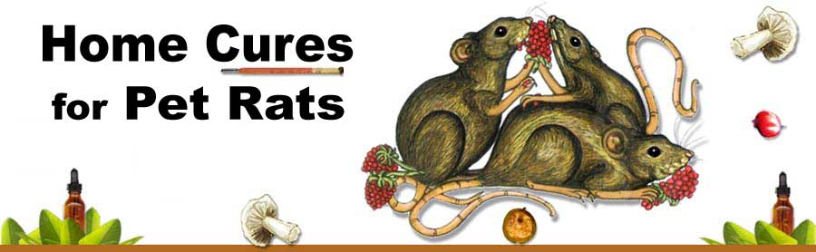 Natural Remedies for Pet Rats