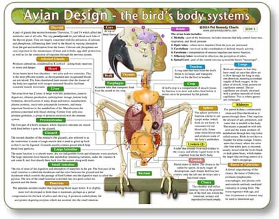 Avian Anatomy Chart