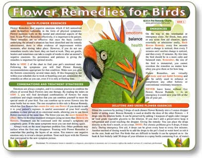 How to Use Flower Remedies for Birds