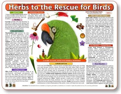 Safe Herbal Medicine for Pet Birds