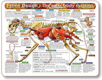 Cat anatomy, learn how the body works, and have a better chance at preventing or treating disease.