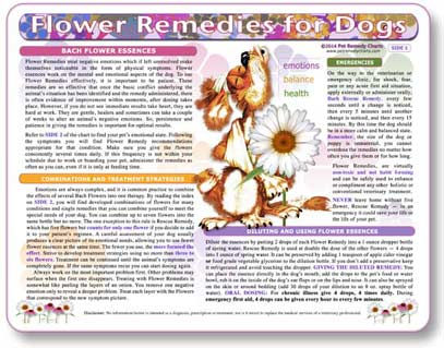 How to give dogs flower essence remedies to dogs.