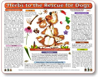 How to use herbal medicine for dogs