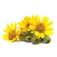 Arnica - Veterinary Materia Medica of Homeopathic Remedies