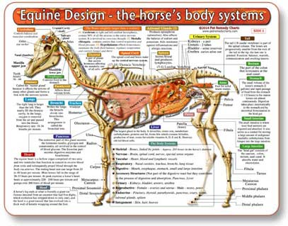 Learn how the horses body works, and have a better chance at preventing or treating disease.