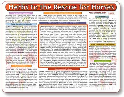 Herbs for horses, a home treatment guide for healing equine disease.