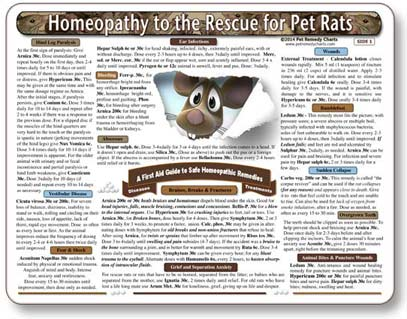 Homeopathic Remedies for Pet Rats